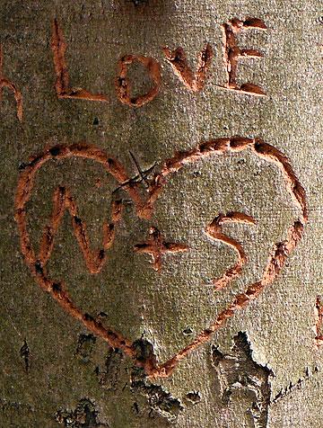 Ein Herz in eine Baumrinde eingeschnitten (Foto: Herter)