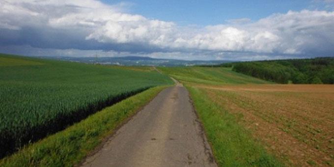 Weg durch Wiesen und Felder (Foto: Herter)