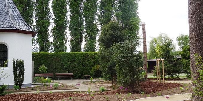 Hinter dem Schönstatt-Heiligtum, dort wo alte Tannen weichen mussten, wurde jetzt eine Friedenslinde gesetzt (Foto: Frenzl)