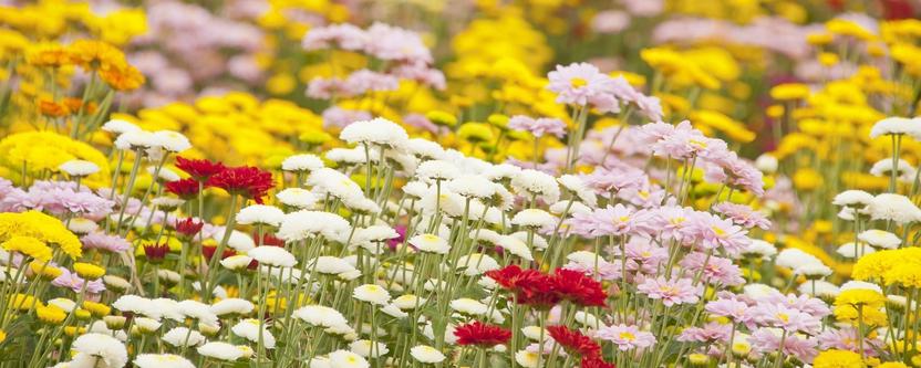 Sommerblumen bei der Landesgartenschau in Bad Lippspringe, NRW (Foto: lgs2017.de)