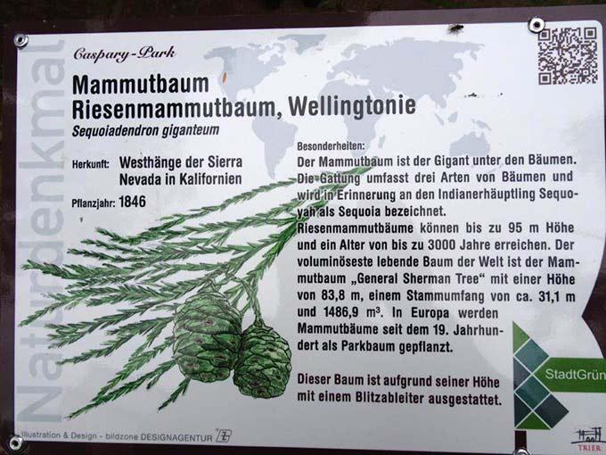 Auf Schildern kann man sich über die besonderen Bäume des Parks informieren (Foto: Brück)