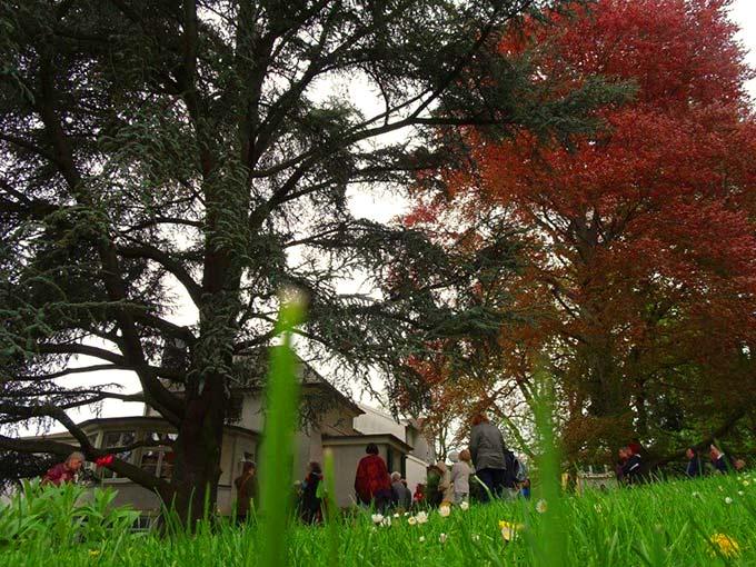 Die riesigen alten Bäume dominieren den Park und das Schönstattzentrum (Foto: Brück)