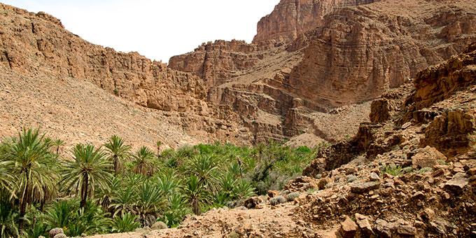 Oase in der Wüste (Foto: alasta_webdesign Pixabay.com)