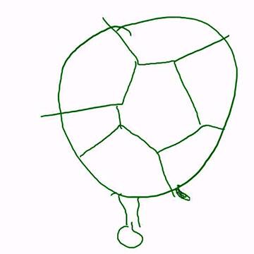 Montagsmaler: Schildkröte