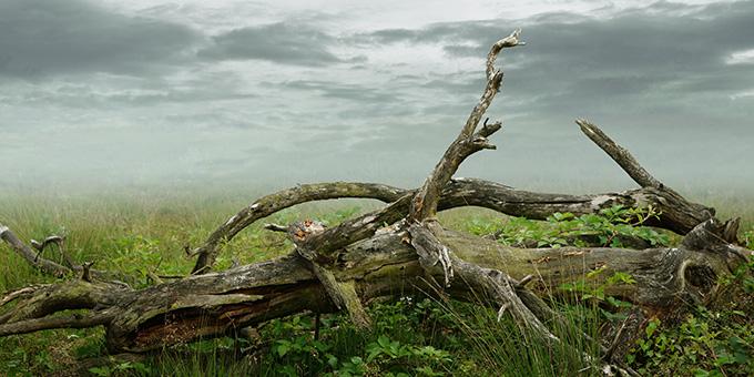 (Foto: pixabay.com)