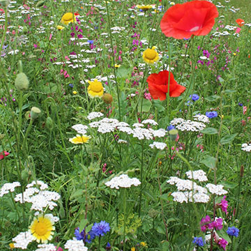 Blumenwiese am Wegrand (Foto: Imwalle)