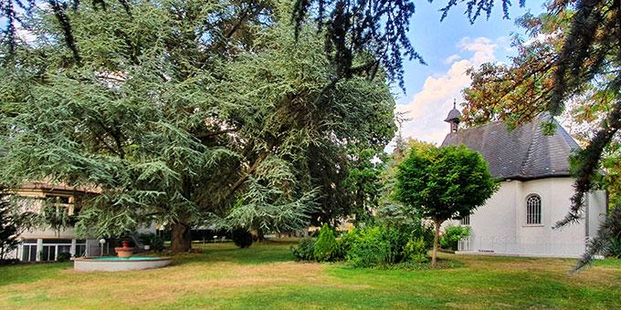 Der ehemalige Caspary-Park ist geprägt von alten Bäumen (Foto: A.M.Brück)