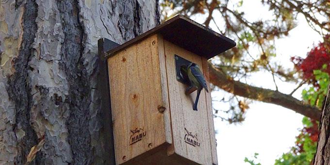 Nistkasten für Vögel (Foto: A.M.Brück)